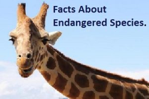 facts-about-endangered-species